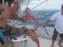 Billfish Babes 2014